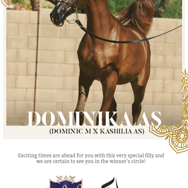 Dominika AS now belongs to new owners with a great vision!