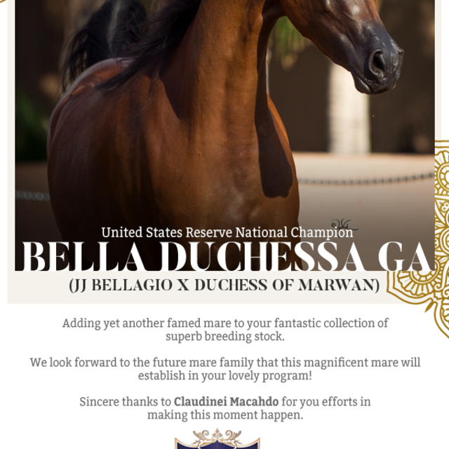 Yet another special mare added to the Cumberland Mountain EQ, LLC collection!