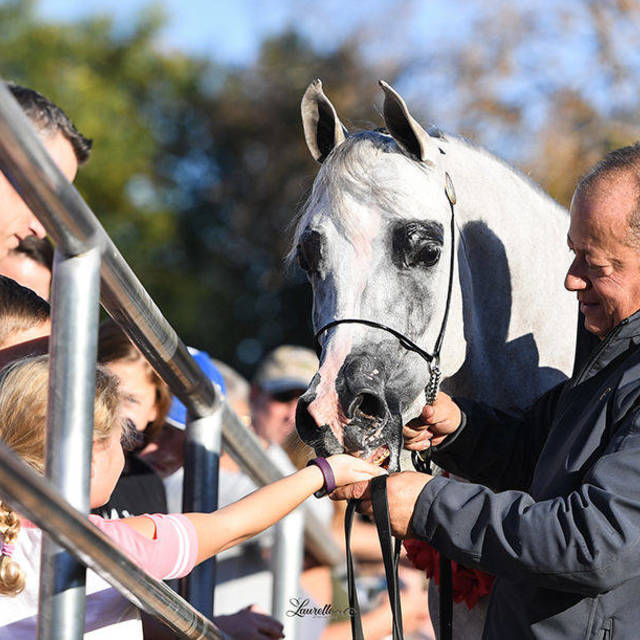 New Years Farm Tours @ Royal Arabians