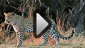 Watch the South Africa video
