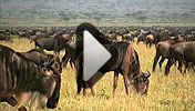 Watch the Tanzania video