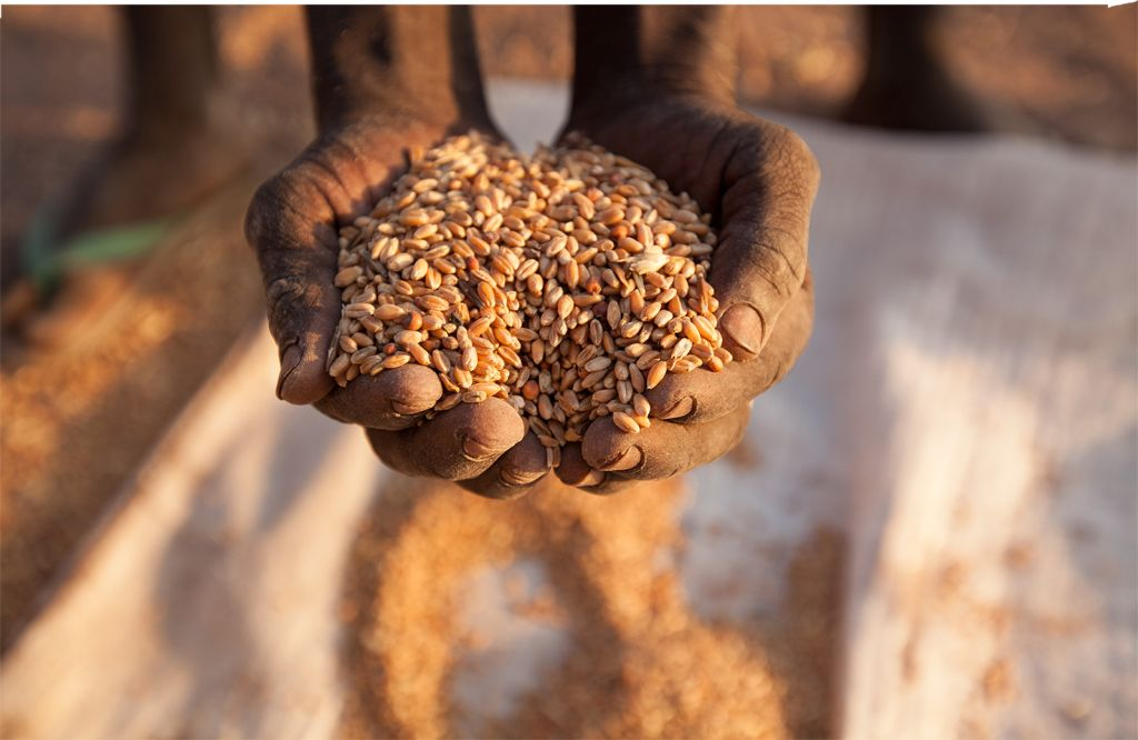 A handful of seeds can seem a gift too small. But sometimes it's a tiny thing that forever changes it all. See how in this interactive poem from Samaritan's Purse.