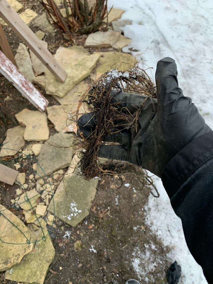 South Elgin, IL - Main line cleaning of roots