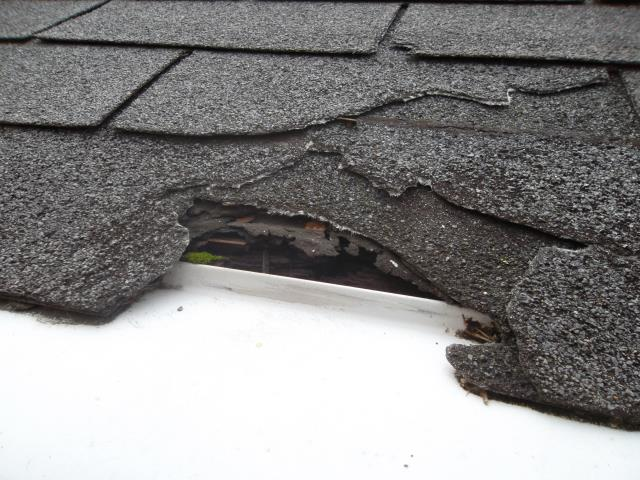 University City, MO - Providing estimate to repair some roof damaged caused by squirrels chewing on the shingles.