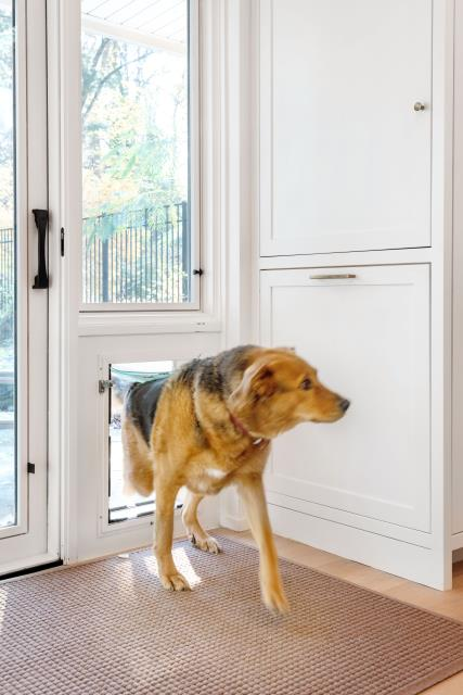 Narberth, PA - When we renovate, we need to include the needs of EVERY family member. In this case our four legged friend, Banjo, got his own doggy door plus custom cabinets for his kibble storage. He even got his own station for eating with the rest of his family. This was just one small part of a large whole house remodel in Penn Valley.