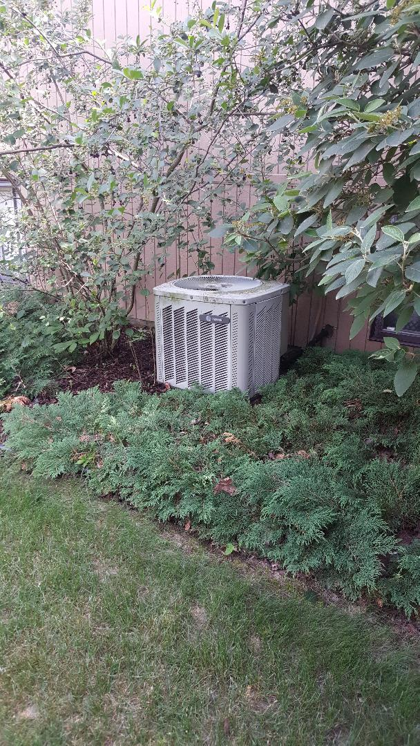 Freeport, IL - Seasonal maintenance on a Trane air conditioner. Look this one is working on its camouflage. Remember to keep unit free of excess plants and trees!