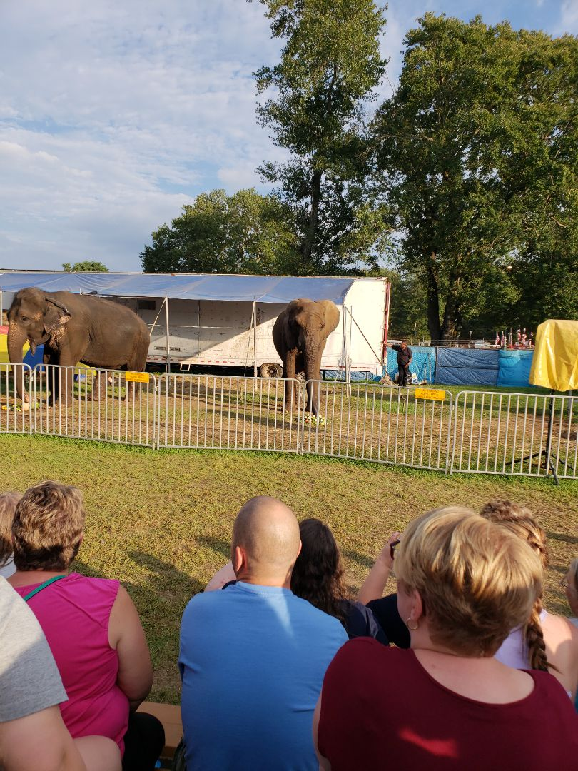 Gilbert, PA - Elephant show after my air conditioning appointment