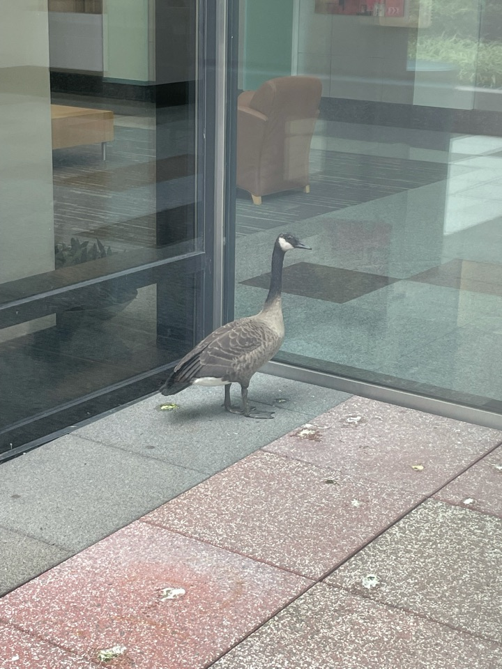 Stamford, CT - Six landmarks lobby is popular with everyone!