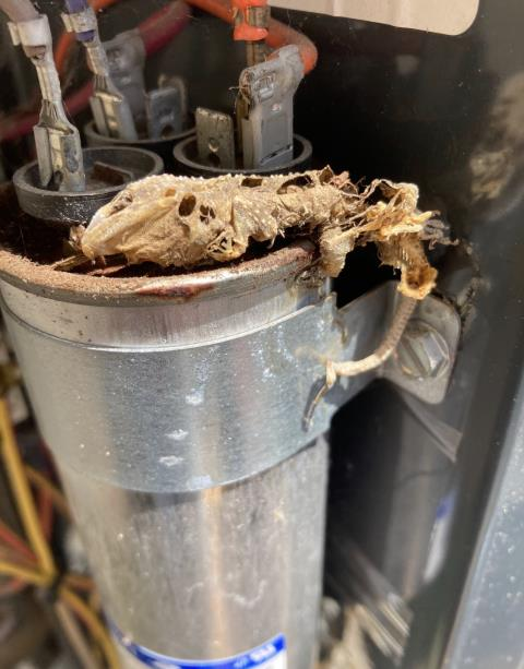 Smithville, TX - Air conditioning repair. The capacitor is out due to a small animal. Replace the part. The air conditioner is cooling properly at this time.