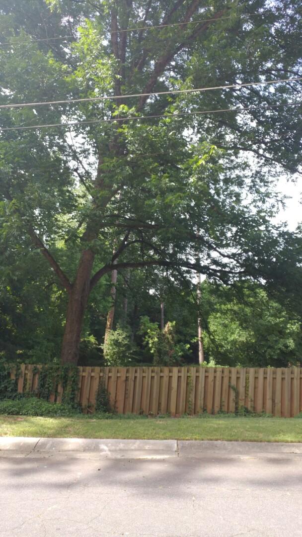 Balancing  trees.