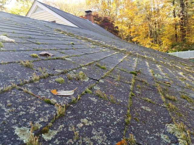 Plainfield, CT - Inspecting a roof in Plainfield Ct. Heavy moss growing on this three tab roof shingle. Will be replacing with a new GAF roof system, using Timberline HD shingles.