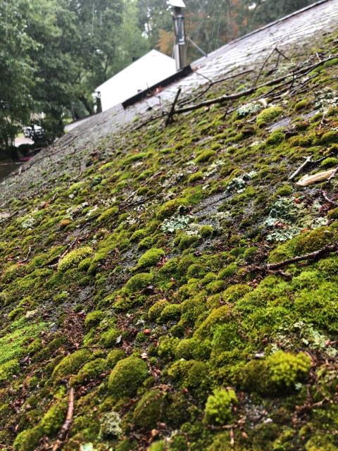 East Lyme, CT - This roof has extreme amounts of moss growing on it. A full roof replacement is the best option to correct this issue. New GAF timberline HDZ roof shingles will be installed.