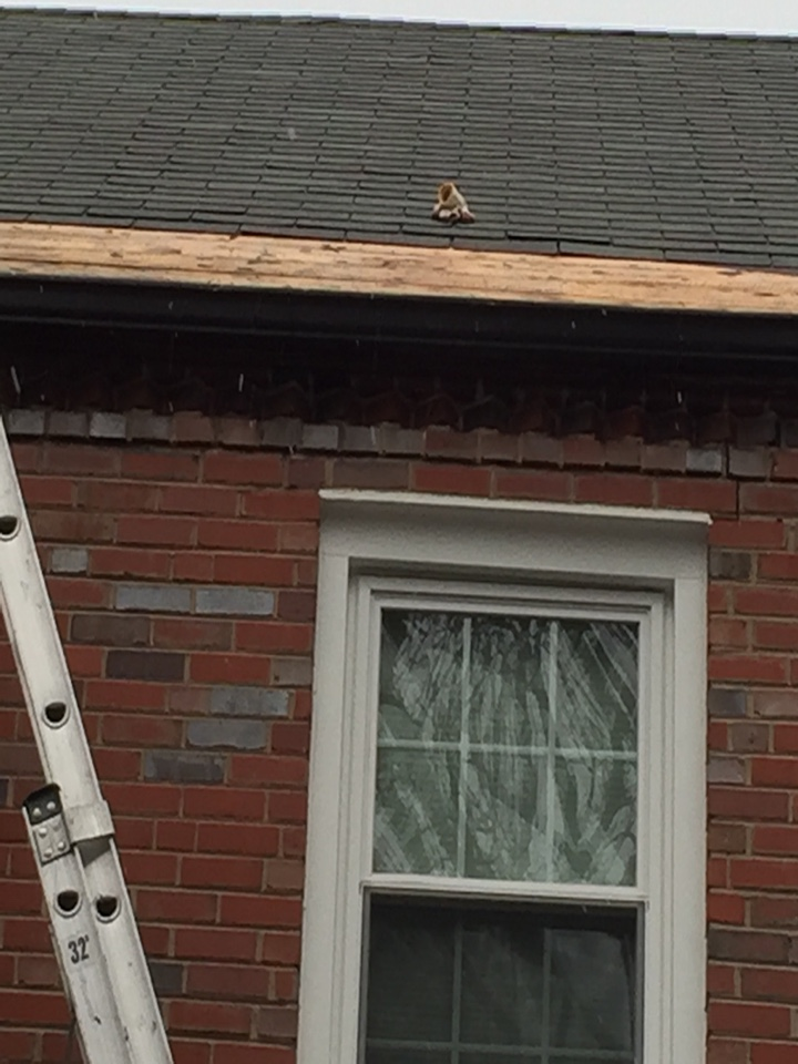 Washington, DC - Installing ice and weather shield and new shingle.