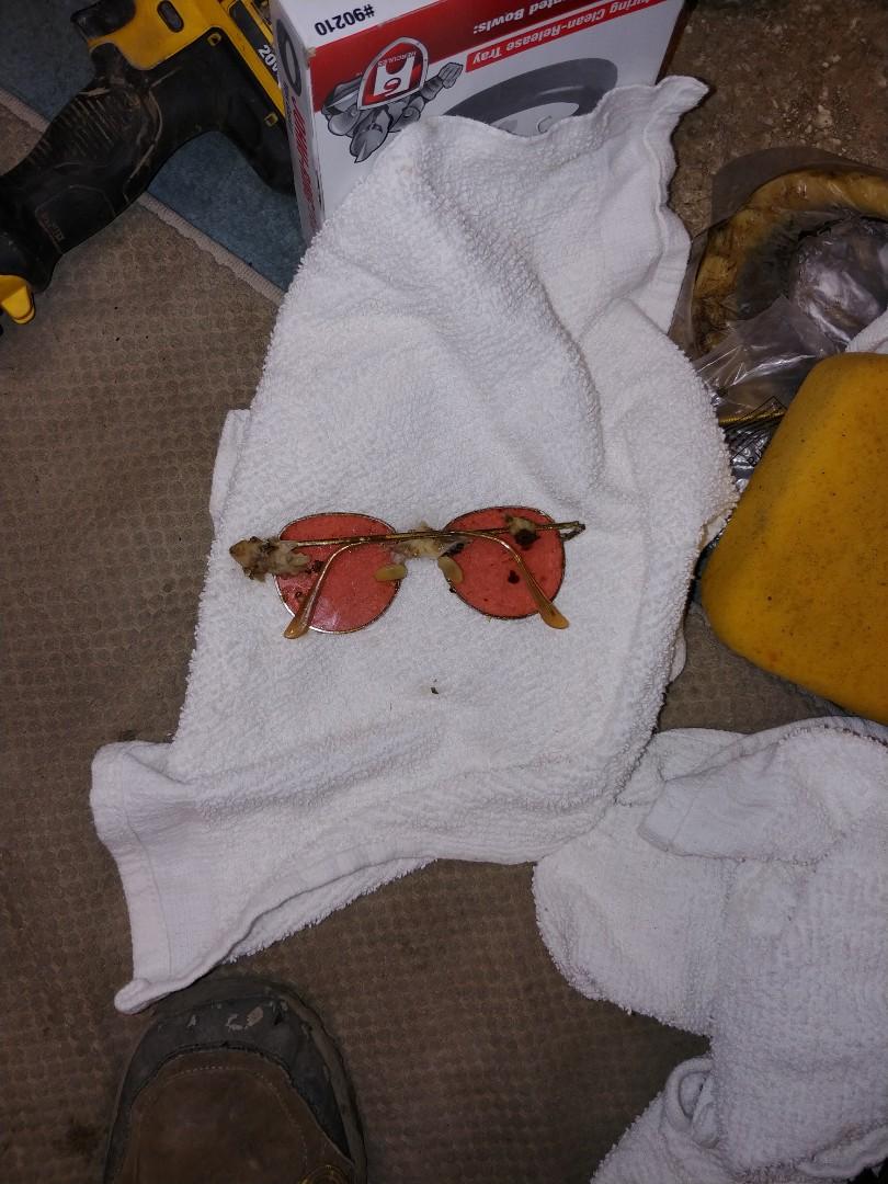 Davis, CA - Removed glasses from toilet