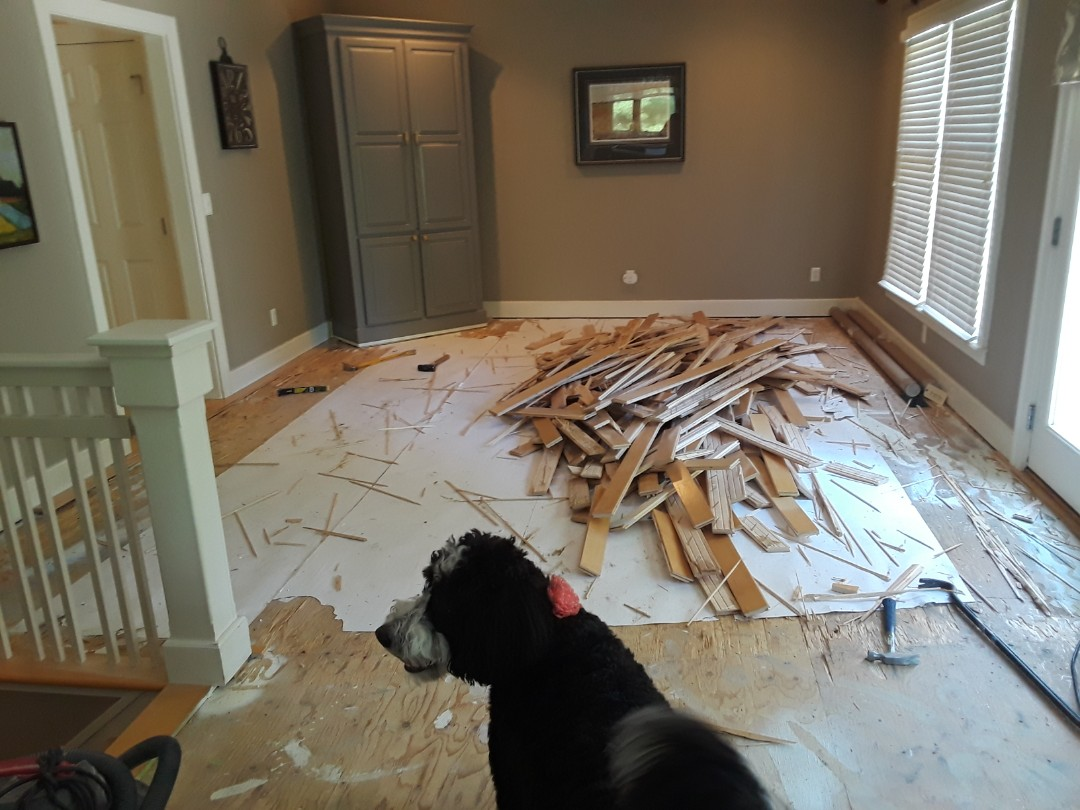 Cannon Township, MI - Hardwood floor demolition in progress. My furry supervisor approves of the work ??