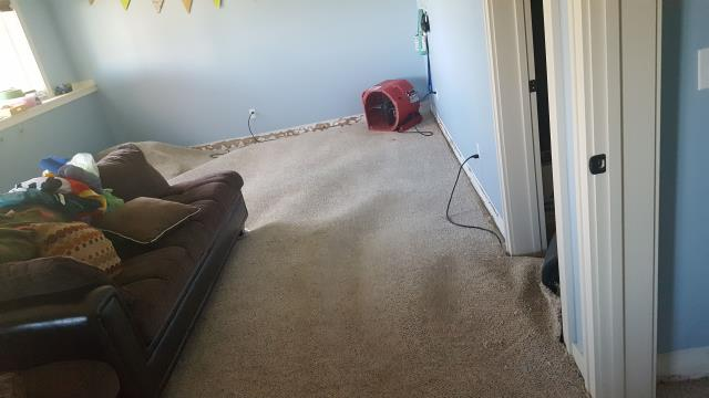 Grand Rapids, MI - Carpet had some water damage. Picture showing how to dry it.