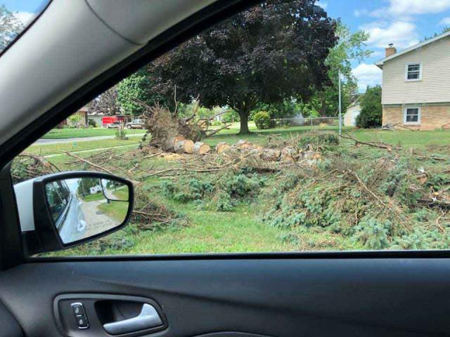 Grand Rapids, MI - Wind damage from straight line winds. Storm damage clean up of massive pine tree.