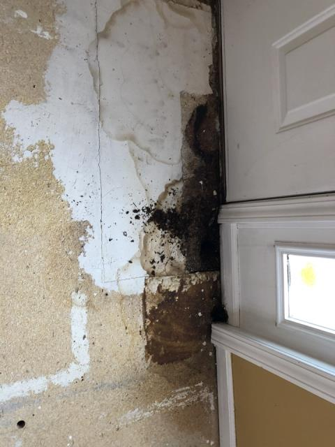 Grand Rapids, MI - Once we removed the old laminate floor we found water damage from front door.