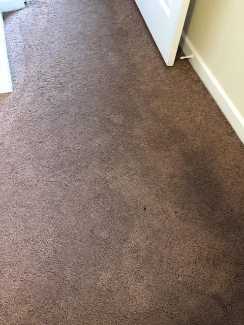 Grand Rapids, MI - Water in the basement from failure of sump pump.