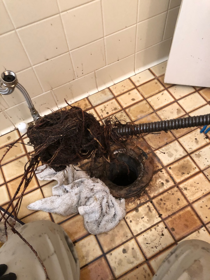 Jeffersonville, IN - Main line stoppage. Drain cleaning. Reset toilet