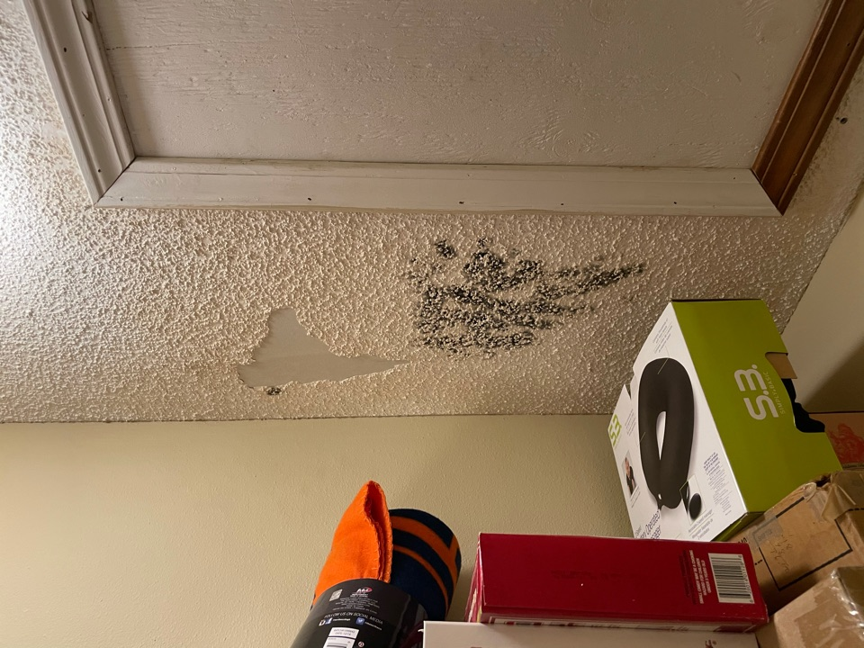 Cantonment, FL - Roof damage that caused mold damage in bedroom and bedroom closet. Moisture has been removed but mold needs to be removed before new drywall can be installed.