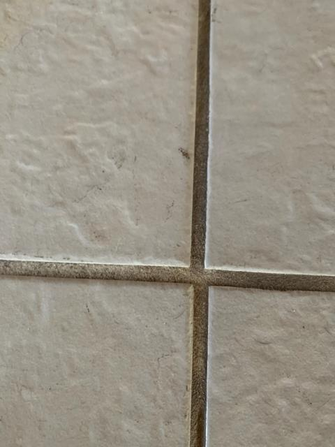 SERVPRO is fully equipped for tile and grout cleaning. These tiles have been stained from the dirt brought in by flood waters in Perdido Key during Hurricane Sally. SERVPRO West Pensacola will come in a nd have this discoloration of the tile and grout back to a nice clean white.