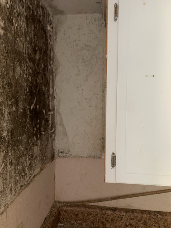 Pensacola, FL - Long term Water Leak requiring Mold Remediation Services in Bellview