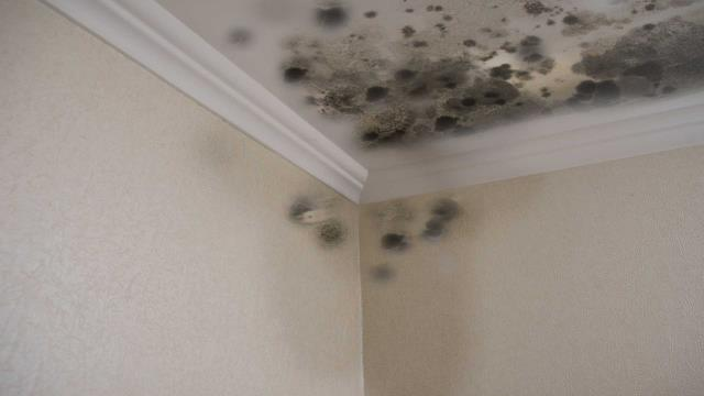 When our technicians arrive to assess and devise a plan of action for suspected microbial damage, you know that mold has met its match.   Learn More: https://www.servprowestpensacola.com/mold-remediation