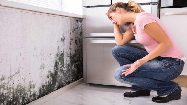 If You See Signs of Mold: Contact the company with the training, equipment and expertise to handle the situation