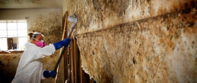 Pensacola, FL - Mold spores are microscopic and float along in the air and may enter your home through windows, doors, or AC/heating systems or even hitch a ride indoors on your clothing or a pet.