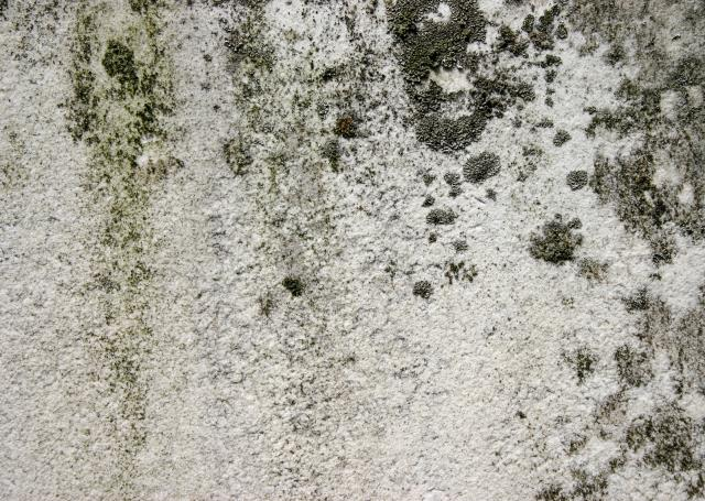 Destin, FL - Commercial Mold Remediation Presents Unique Challenges. Visit Here To Learn More: https://www.servprowestpensacola.com/commercial-mold-removal