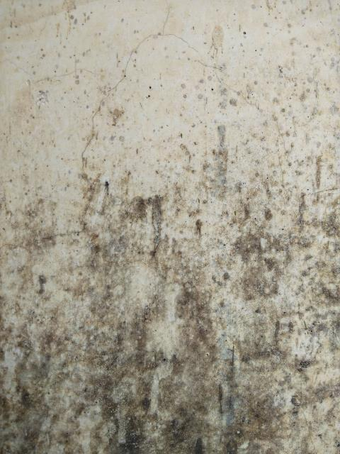With sensational news stories and misleading advertising, you can easily understand why so many people are misinformed about indoor mold. Learn the facts about mold and the mold remediation process here: https://www.servprowestpensacola.com/mold-remediation