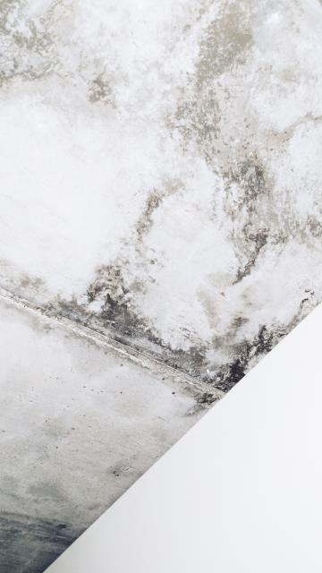 While some species usually don't cause odors, when musty mold odor combines with other elements, you may conclude that mold is present.