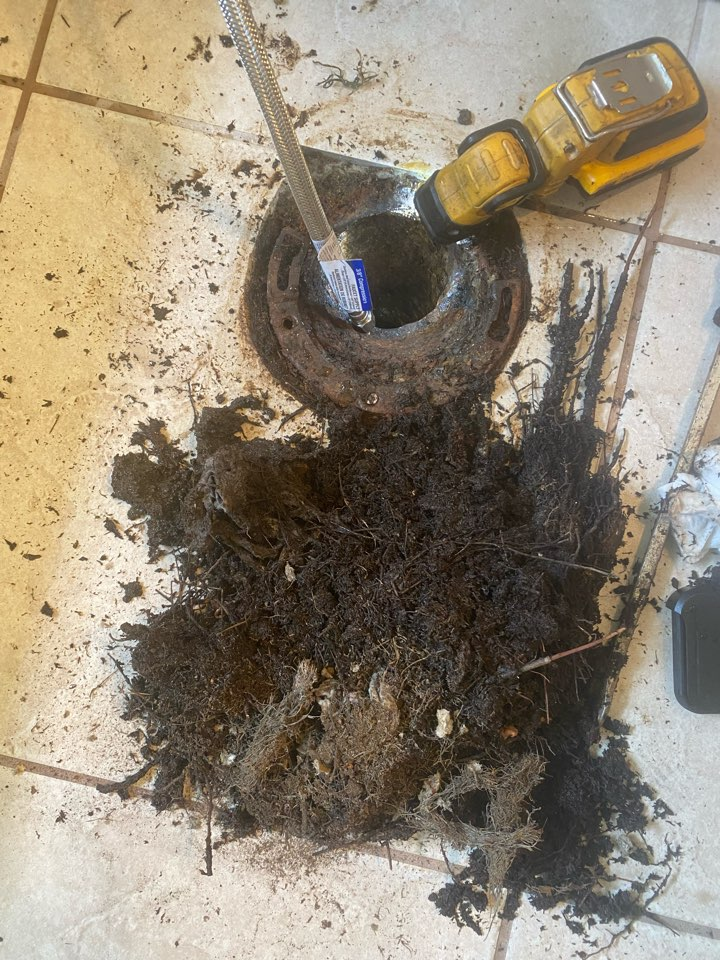 Sanford, FL - Toilet line had roots that came from around the flange removed them and put epson salt down around flange
