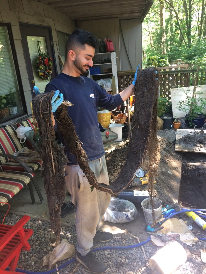 """Vancouver, BC - Removed 14 ft root intrusion from 6"""" storm pipe"""
