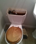 Thornton, CO - American standard toilet repair