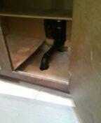 Golden, CO - Kitchen drain line repair
