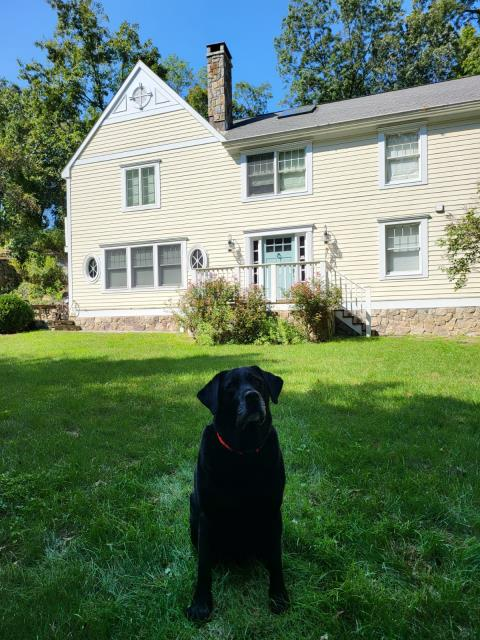 Darien, CT - Moose was very proud to show off his Darien home. His homeowners gave us a call to evaluate the roof after a storm and discovered a leak. We will be repairing the damage located near the chimney.