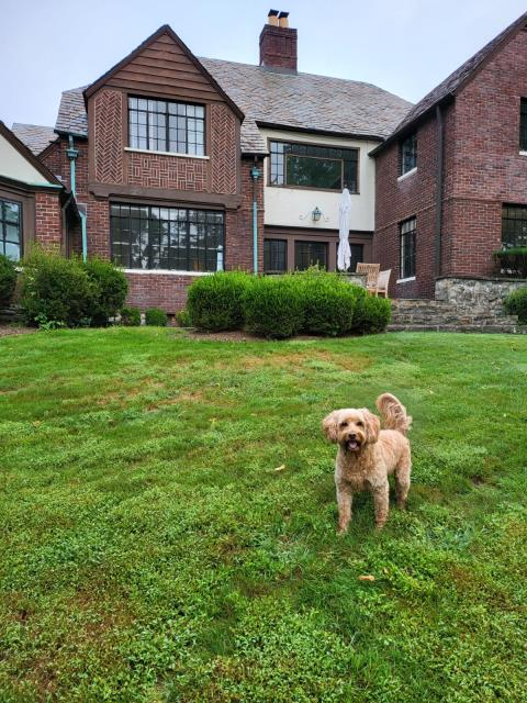 Darien, CT - Here in Darien evaluating a chimney leak on the roof due to the recent storms with heavy rains and winds. Phoebe is very excited that we will be sealing the leak this afternoon, no more worries for her or her family!
