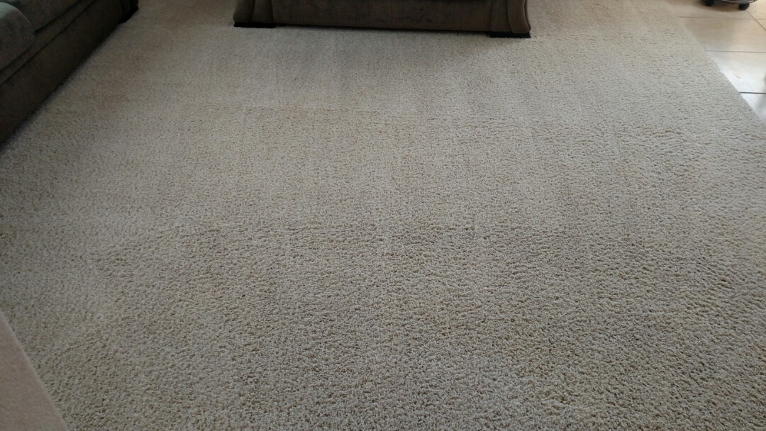 Cleaned carpet and extracted pet urine and coffee stains for a regular PANDA family in Chandler, AZ 85249.