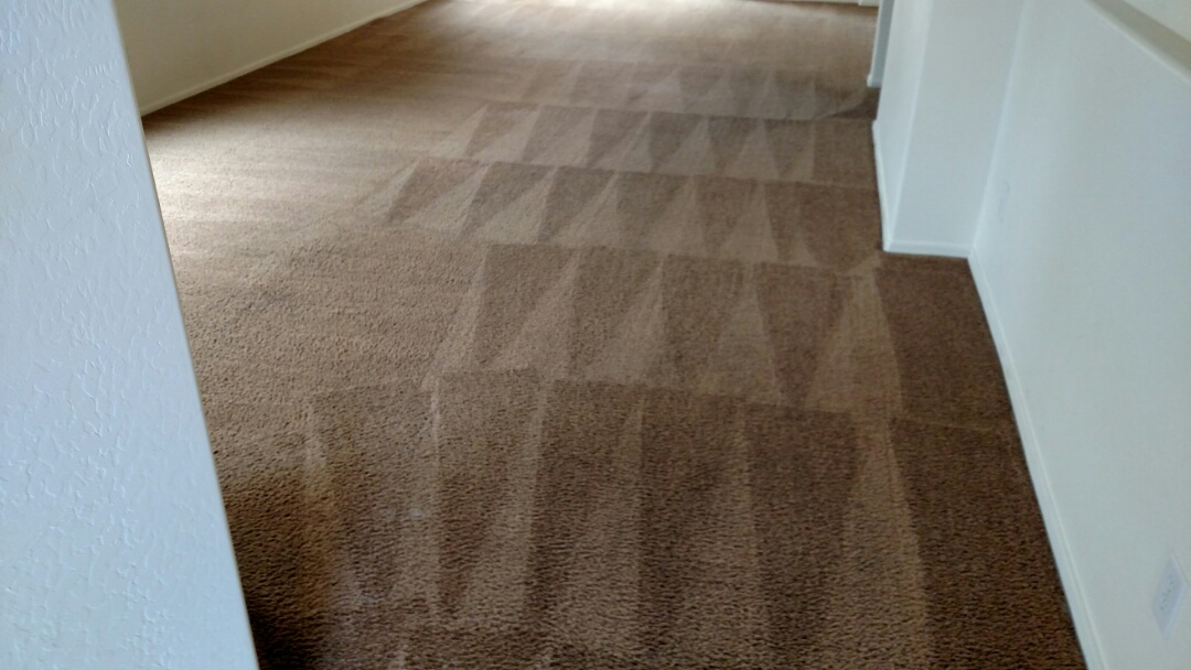 Cleaned carpet for a new PANDA family in Gilbert, AZ 85295.