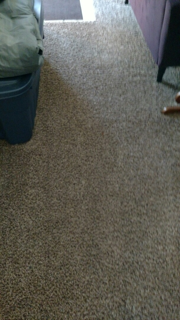 Cleaned carpet for a regular PANDA customer in Mesa, AZ 85209.