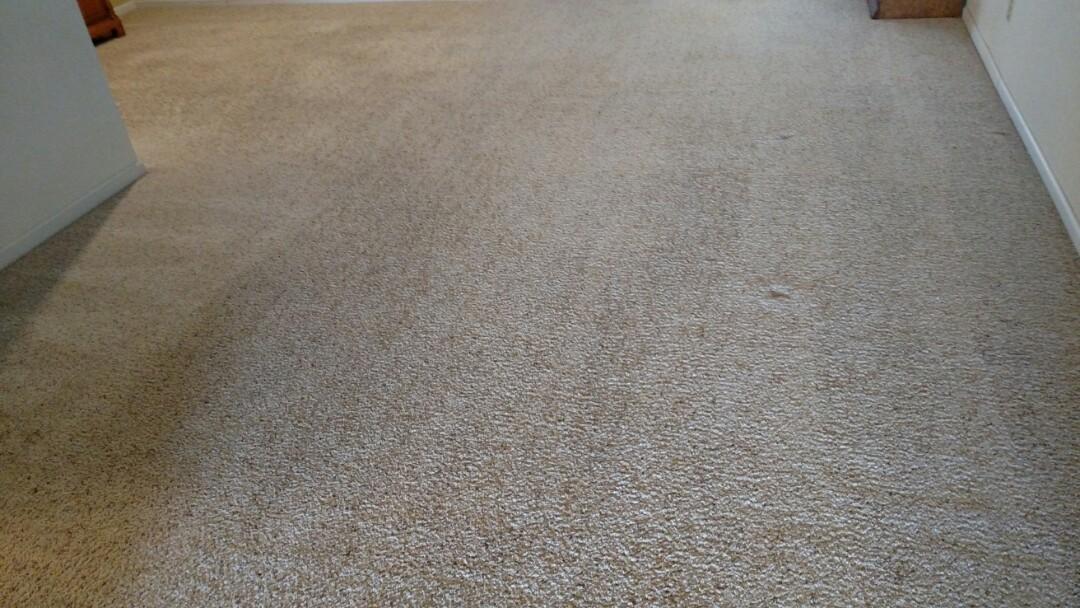Clean the carpet for a regular PANDA family in Mesa, AZ 85205