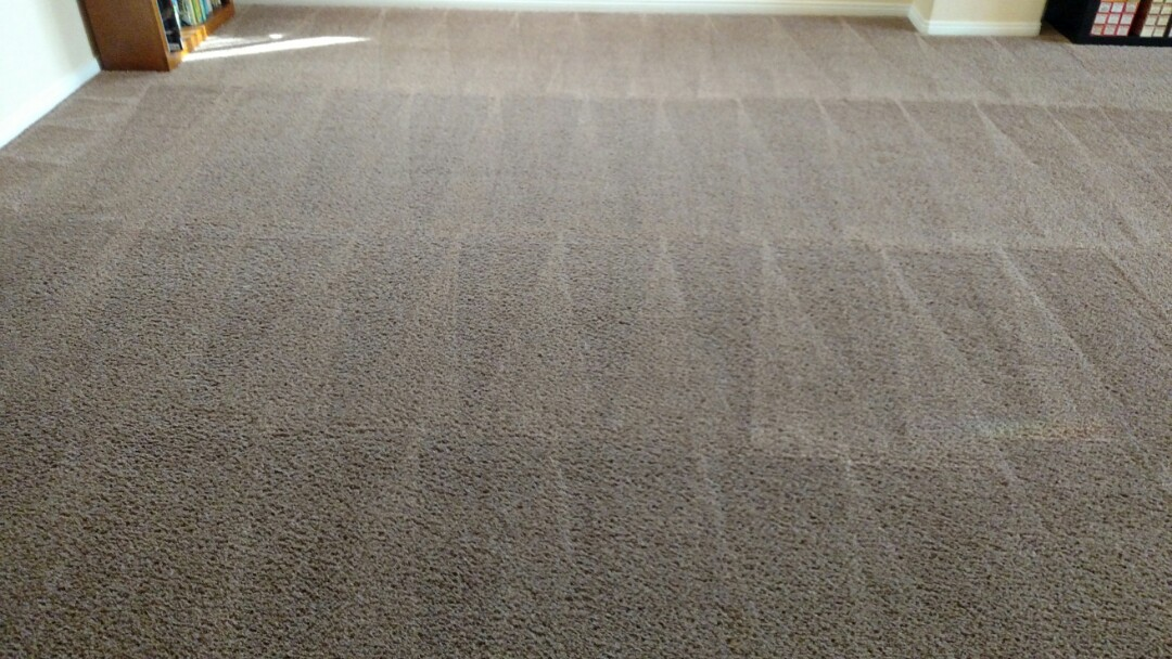Gilbert, AZ - Cleaned carpet and extracted stains for a regular PANDA family in Gilbert, AZ 85295.
