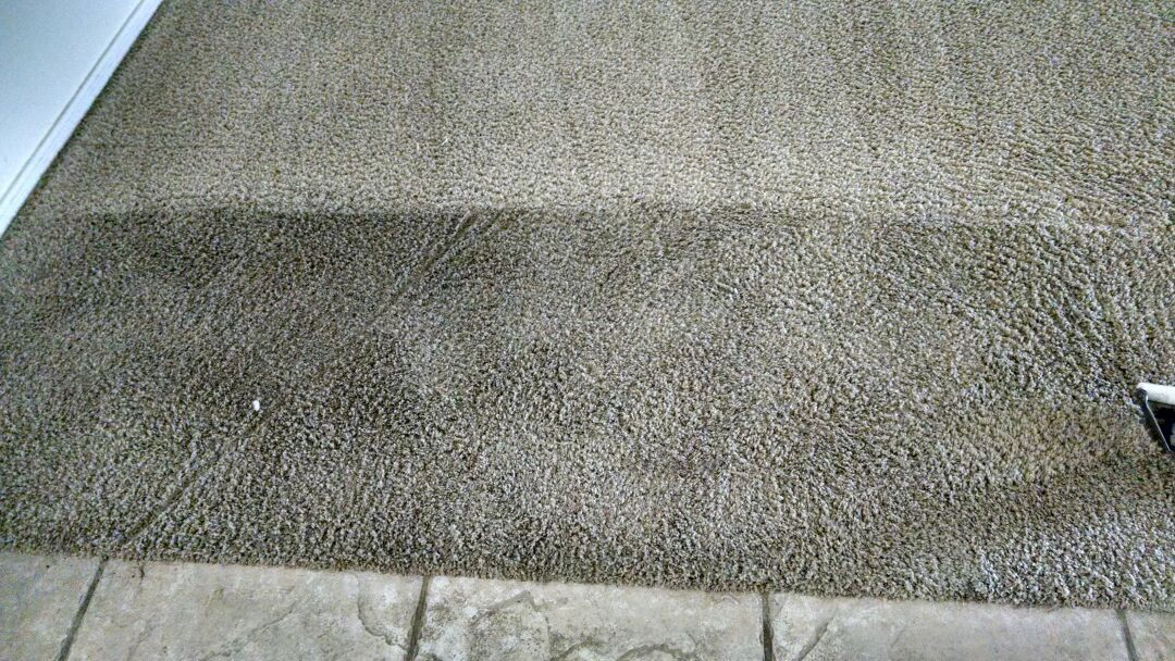 Cleaned carpet with many pet stained urine issues, for a new PANDA customer in Chandler AZ 85225.