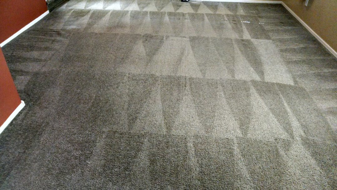 Cleaned carpet for a new PANDA family in The Willows, Gilbert AZ 85295.