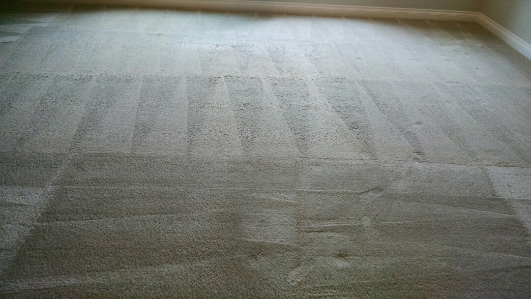 Cleaned carpet and extracted feces odor for a new PANDA family in Velvende, Gilbert AZ 85295.