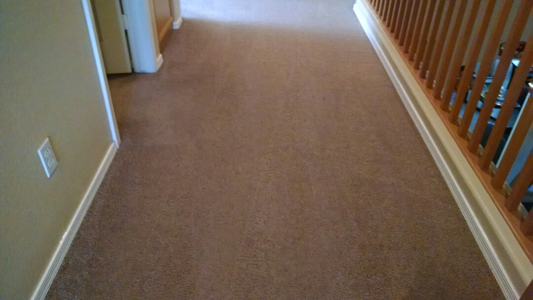 Mesa, AZ - Cleaned carpet for a new PANDA family in Mesa AZ 85204.