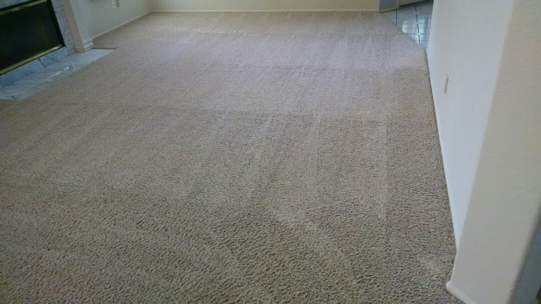 Cleaned carpet for a regular PANDA customer in Tempe AZ 85284.