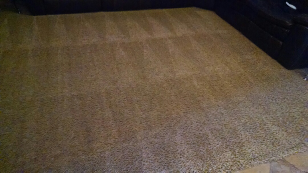 Cleaned carpet for a regular PANDA family in Lyon's Gate, Gilbert AZ 85295.